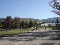Nara_park1