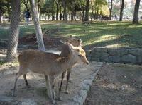 Nara_park2