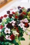 Flowers_main_1